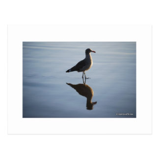 reflexioner vykort