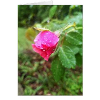 Regna-tappat rosa sympatikort hälsningskort