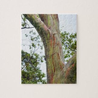 RegnbågeEucalyptusträd, Maui, Hawaii, USA Pussel