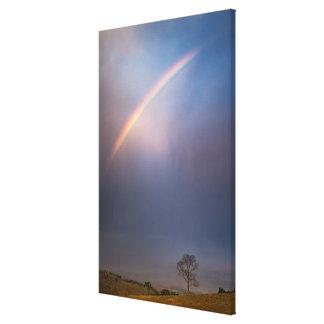 Regnbågen och träd landskap canvastryck