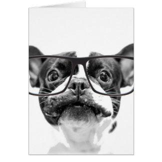 Reputable fransk bulldogg med exponeringsglas OBS kort