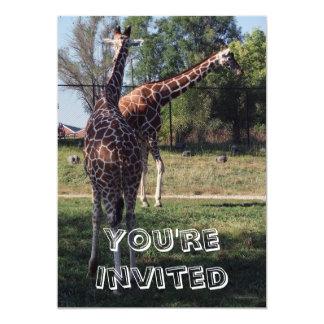 Reticulated inbjudan för giraffbarns