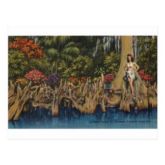 Retro Florida Cypress för vintage trädgårdar Vykort