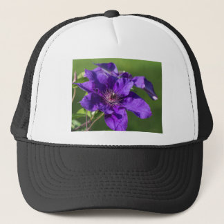 Rik blommarmakro för purpurfärgad Clematis Keps