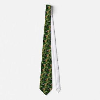 Ring-hånglad pheasant slips