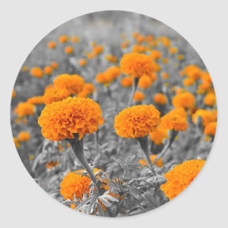 Ringblomma- eller Tagetes blommor Runt Klistermärke