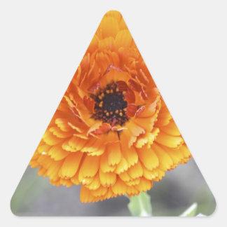 Ringblomma Triangelformat Klistermärke