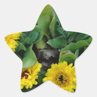 ringblommar stjärnformat klistermärke