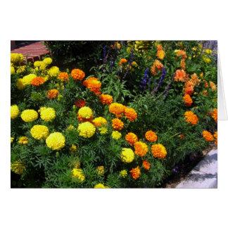 Ringblommaträdgård - hälsningkort hälsningskort