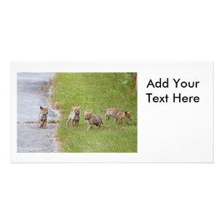 Rinnande babyprärievargar och leka anpassade foto kort