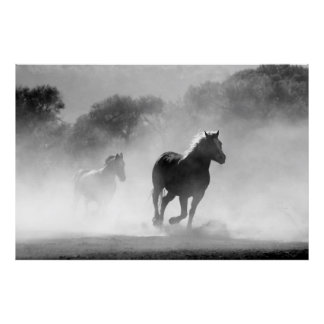 Rinnande svartvitt härligt landskap för hästar poster