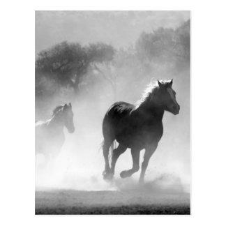 Rinnande svartvitt härligt landskap för hästar vykort