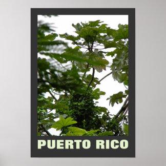 Rio Grande Puerto Rico Poster