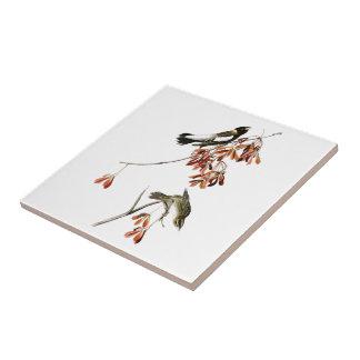 RisfågelJohn James Audubon fåglar av Amerika Liten Kakelplatta