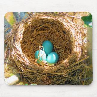 Robin ägg i ett trädgårdträd bygga bo musmattor
