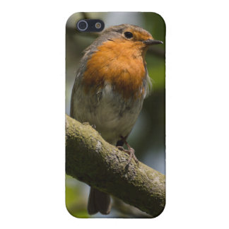 Robin iPhone 5 Cases