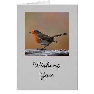 Robin kort