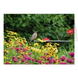Robin och blommor OBS kort