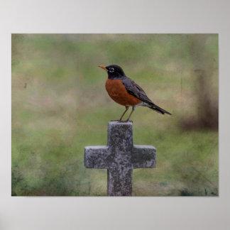 Robin på en kor poster