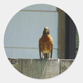 robin på staket runt klistermärke