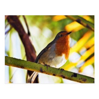 Robin röd bröstfågel vykort
