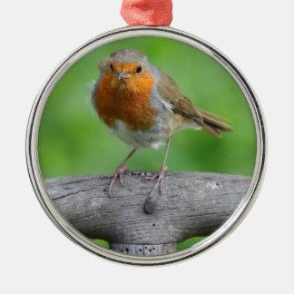 Robin rött bröst julgransprydnad metall