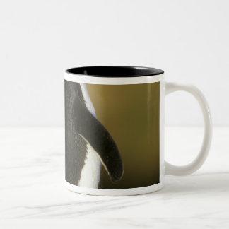 Rockhopper pingvin-, Eudypteschrysocome), Två-Tonad Mugg