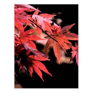 Röd Acer vykort