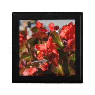 Röd Begonia Smyckeskrin