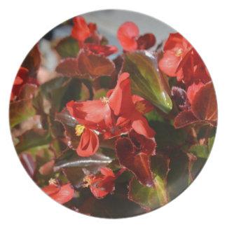 Röd Begonia Tallrik