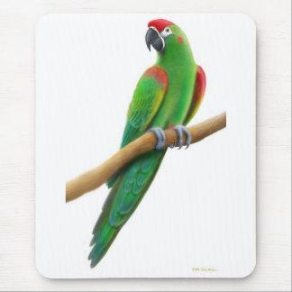 Röd beklädd Macawpapegoja Mousepad Musmatta