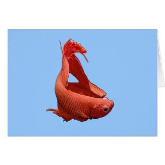 Röd Betta Siamese stridighetfisk Hälsningskort