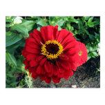 Röd blomma vykort