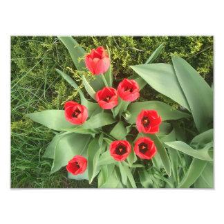 Röd blommigt foto