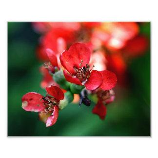 Röd blommigt foton