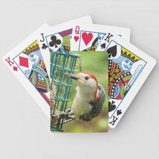 Röd-buktad hackspett som leker kort spelkort