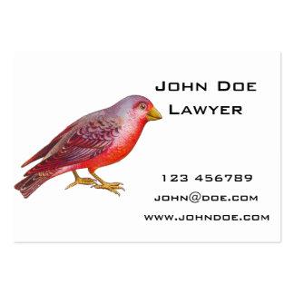 Röd fågel för vintage set av breda visitkort