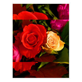 Röd gul ros vykort