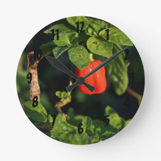 röd habanernohettpeppar mot löv rund klocka