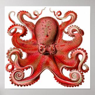 Röd Haeckel bläckfisk Poster