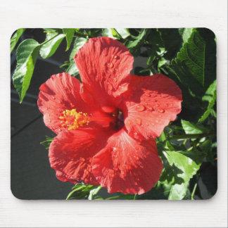 röd hibiskus musmatta