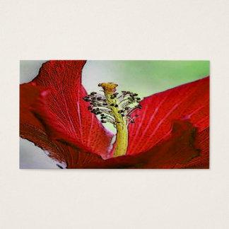Röd hibiskus visitkort
