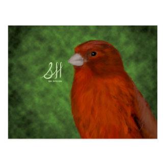 Röd kanariefågel vykort