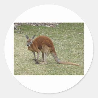 röd känguru runt klistermärke