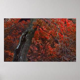 Röd Oakskanvastryck Print