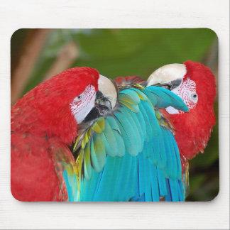 Röd och för blåttpapegojatryck mousepad musmatta