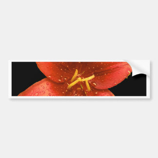 Röd orange lilja bildekal