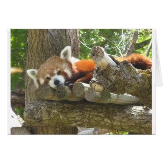 röd panda hälsningskort