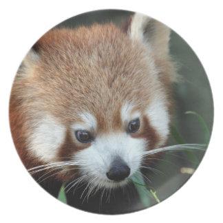 Röd Panda, Taronga Zoo, Sydney, Australien Tallrik