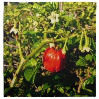 röd peppar för singelhabanero i växt tygservett